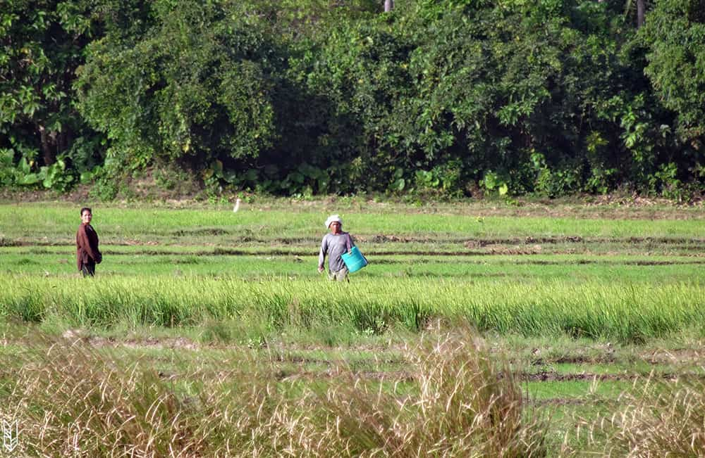 s'aventurer dans les rizières d'El Nido - Philippines