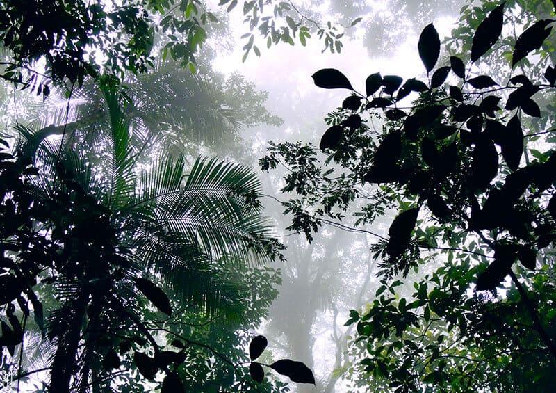 forêt Tijuca à Rio