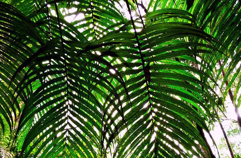 visiter la forêt de Tijuca à Rio