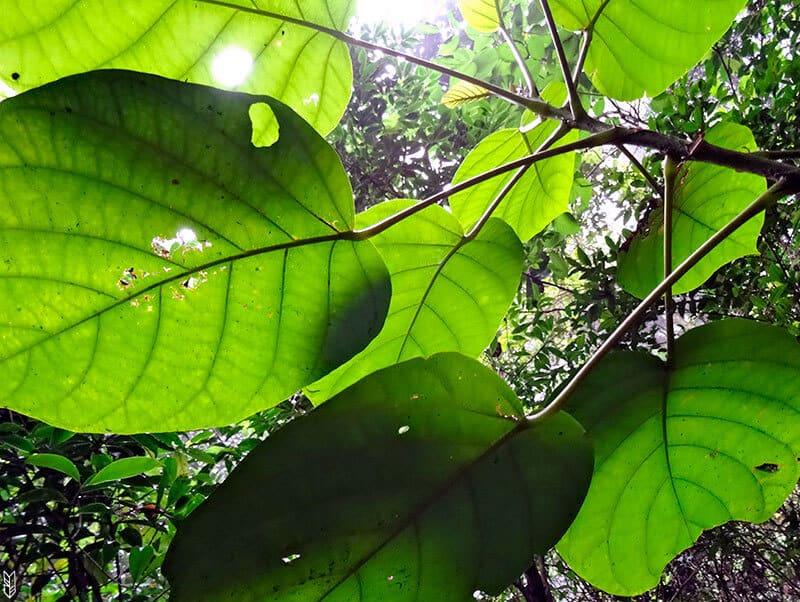 Quoi visiter Rio ? La forêt Tijuca
