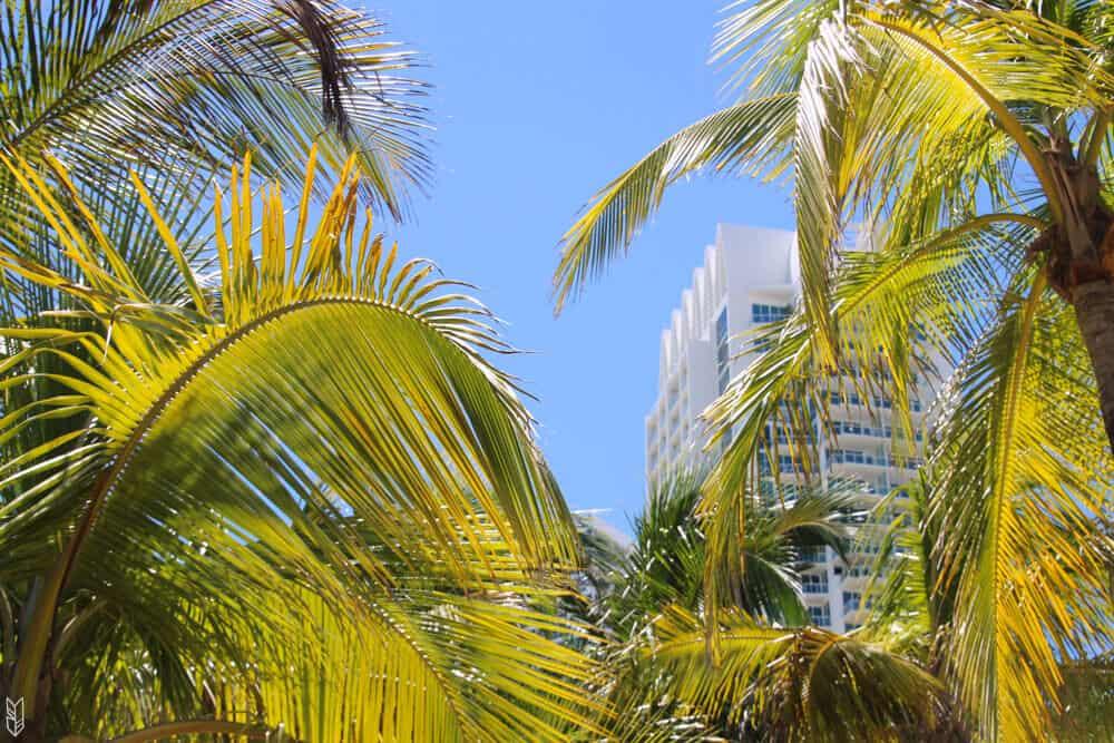les palmiers de South Beach