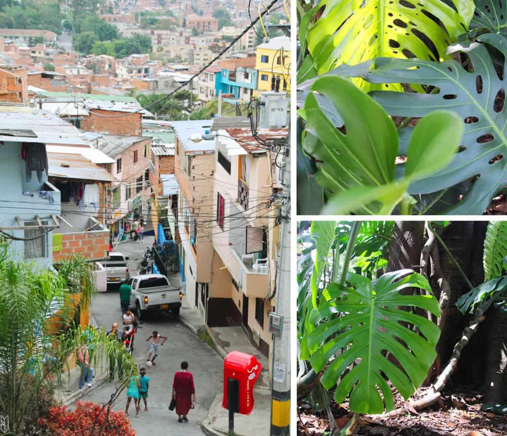 vivre à Medellín - Colombie